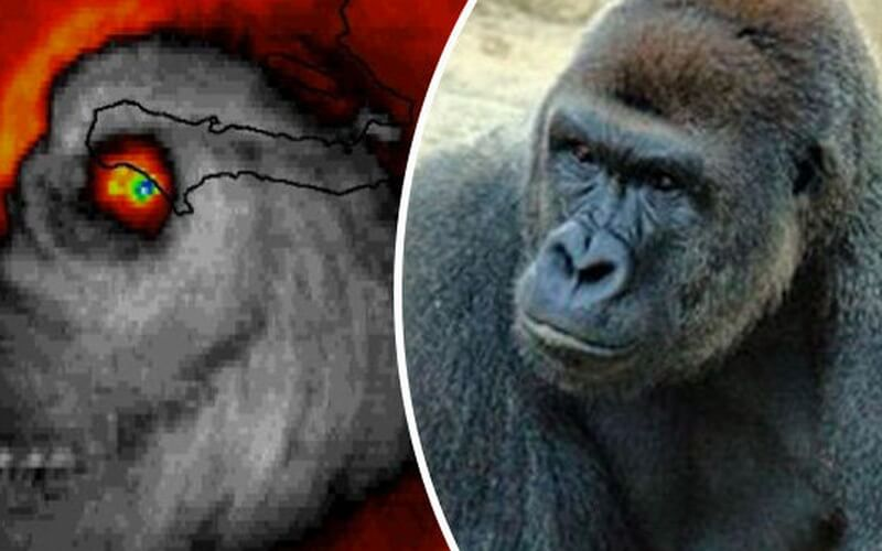 harambe s revenge internet goes crazy after satellite image of